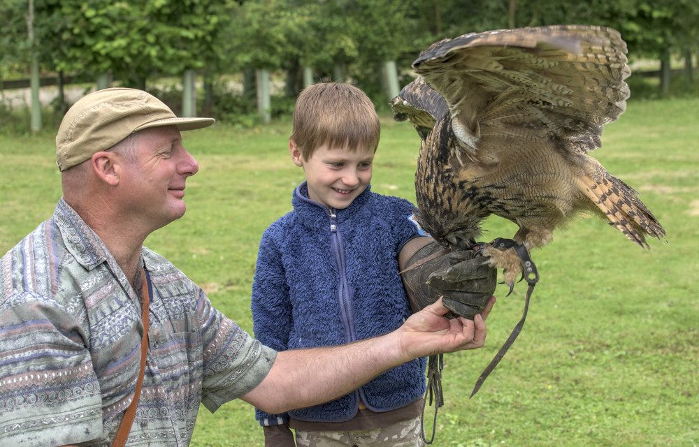 Falconry experience days  with children